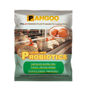 Probiotics for raising laying hens